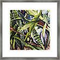 Languid Cactii Framed Print by Lisa Boyd