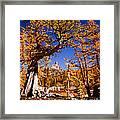 Larches Frame Prusik Peak Framed Print