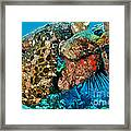 Large Frogfish Framed Print