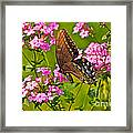 Late Summer Color Framed Print
