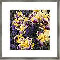 Lavender And Irises Framed Print