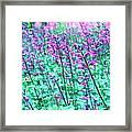Lavender Color Flowers Framed Print