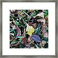 Law Of Nature Framed Print