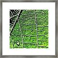 Leaf Abstract - Macro Photography Framed Print