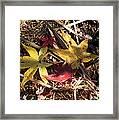 Leaf Collage Framed Print