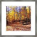 Leaf Covered Trail Framed Print