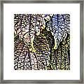 Leaf Series 15 Framed Print