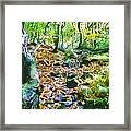 Leaf Stream Framed Print