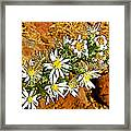 Leafy-bract Asters In Wildcat Canyon Trail Along Kolob Terrace Road In Zion National Park-utah Framed Print