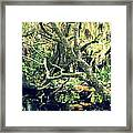 Leaning Branches Framed Print