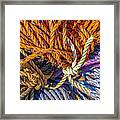 Learn The Ropes Framed Print