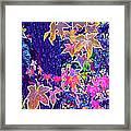 Leaves 1 Framed Print