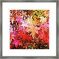 Leaves 11 Framed Print