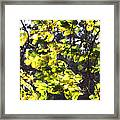 Leaves Blowing Framed Print