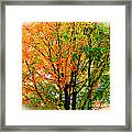 Leaves Changing Colors Framed Print