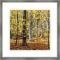 Leaves In The Woods Framed Print