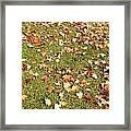 Leaves On Grass Framed Print