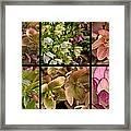 Lenten Rose Collage Framed Print