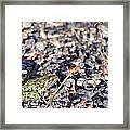 Leopard Frog And Gravel Framed Print