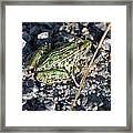 Leopard Frog In Gravel II Framed Print