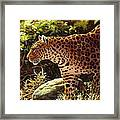 Leopard Painting - On The Prowl Framed Print