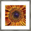 Let The Sun Shine In Framed Print