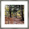 Let's Take A Walk In The Woods Framed Print