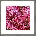 Lettuce Framed Print