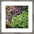Lettuce Medley Framed Print