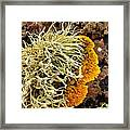 Lichen And Weed Framed Print