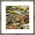 Lichens And Moss In Glen Strathfarrar Framed Print