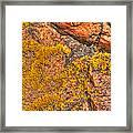 Lichens On The Shoreline Rocks 2 Framed Print
