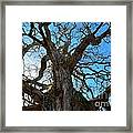 Life Of A Tree Framed Print