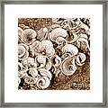 Life On The Rocks In Sepia Framed Print