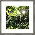 Light Dancing Framed Print