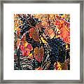 Light Through Fall Vineyard Framed Print