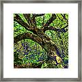 Likin Lichen - Blue Ridge Mountains Framed Print