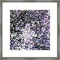 Lilac Crepe Myrtle Bloom  Framed Print