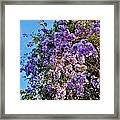 Lilac Tree Framed Print