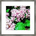 Lilacs After The Rain Framed Print