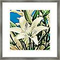 Lilies In White Framed Print