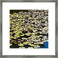 Lilly Pads Framed Print
