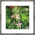Lily Garden Framed Print