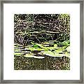 Lily Pads 1 Framed Print
