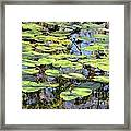 Lily Pads In The Swamp Framed Print