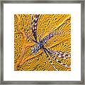 Lionfish Against Yellow Fan Coral Framed Print