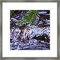 Little Falls Framed Print by Donald Torgerson