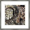 Little Owl 4 Framed Print