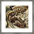Lizard Detail II Framed Print