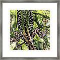 Lizard In Green Nature - Elena Yakubovich Framed Print